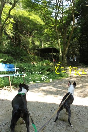 槙尾山 003_edited-1