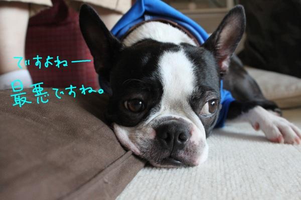 鶴見緑地 011-1