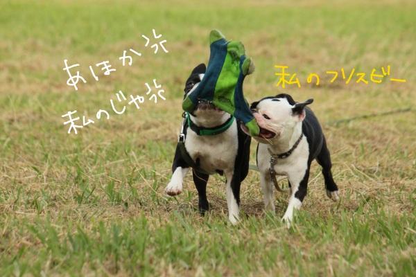 鶴見緑地 156-1