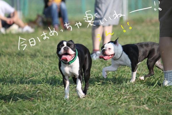 海ふれ2011.9.10 104_edited-1