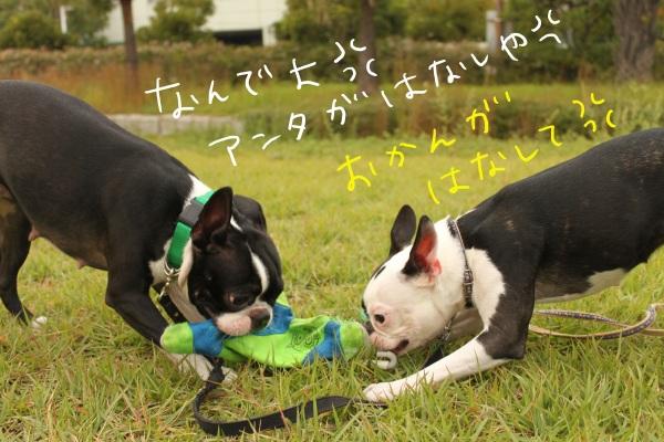 ぽんみり2011.10.11 040_edited-1
