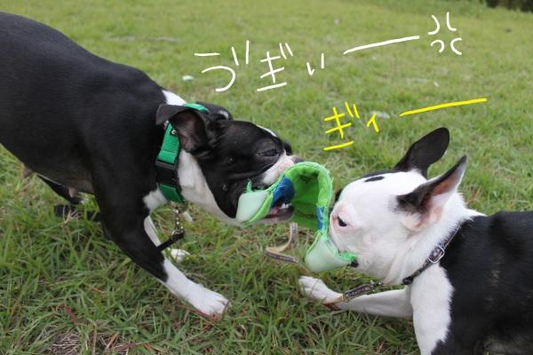 ぽんみり2011.10.11 007_edited-1