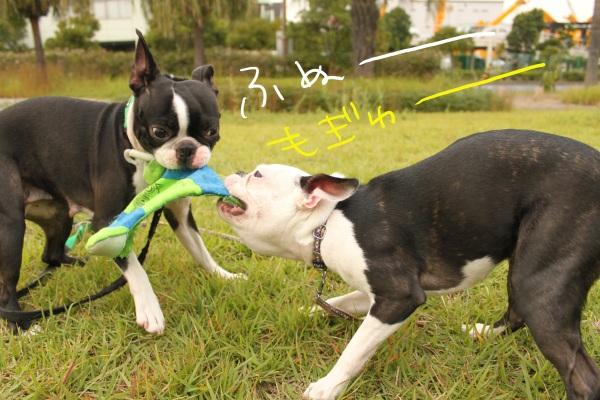 ぽんみり2011.10.11 034_edited-1