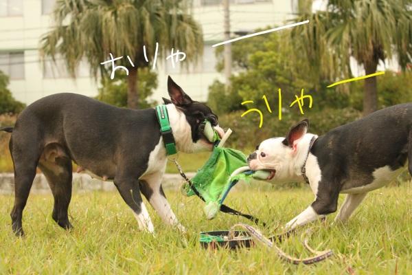 ぽんみり2011.10.11 087_edited-1