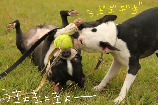 ぽんみり2011.10.11 136_edited-1