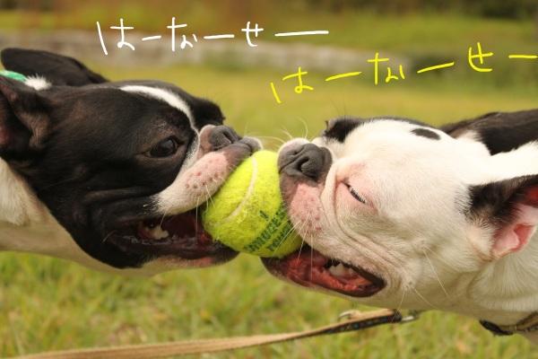 ぽんみり2011.10.11 129_edited-1