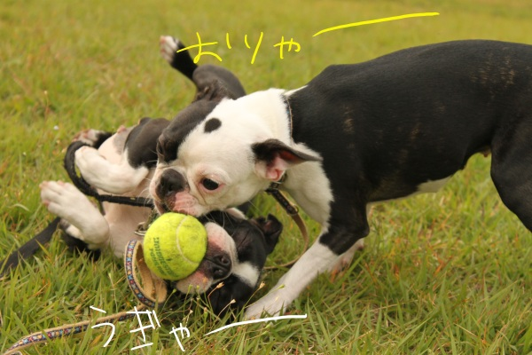 ぽんみり2011.10.11 137_edited-1