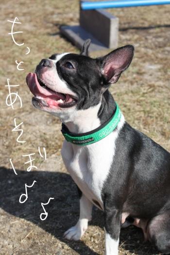 琵琶湖バレイ10.16 043_edited-1