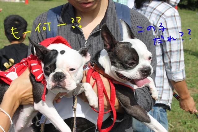 関ボス2011.10.23-1 120_edited-1 (640x427)