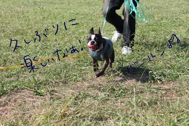 関ボス2011.10.23-1 203_edited-1 (640x427)