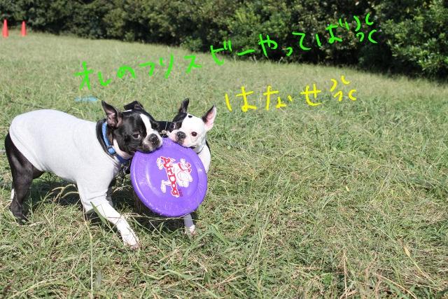 関ボス2011.10.23-1 181_edited-1 (640x427)