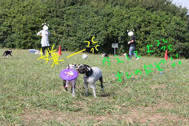 関ボス2011.10.23-1 176_edited-1 (640x427)