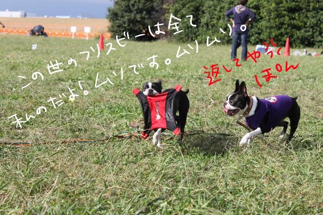 関ボス2011.10.23-1 283_edited-1 (640x427)