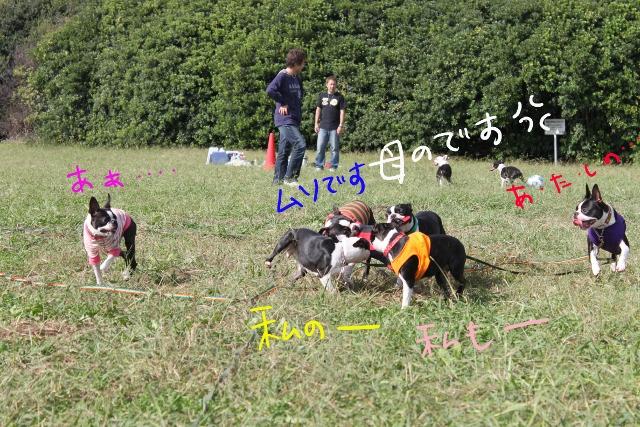 関ボス2011.10.23-1 270_edited-1 (640x427)