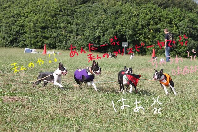 関ボス2011.10.23-1 258_edited-1 (640x427)