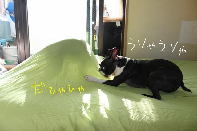 ぽんみりシーツ 026_edited-1 (640x427)