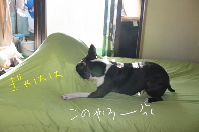 ぽんみりシーツ 025_edited-1 (640x427)