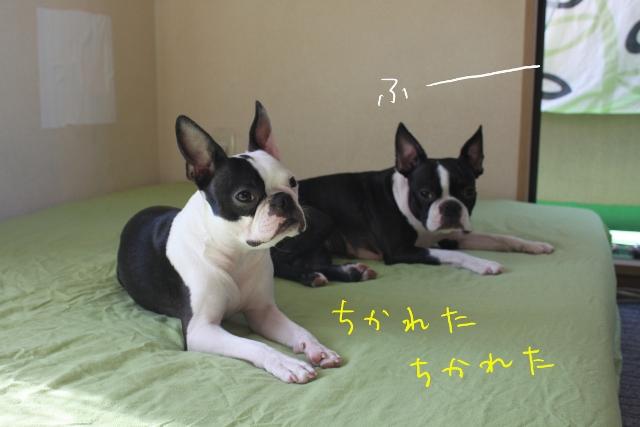 ぽんみりシーツ 042_edited-1 (640x427)