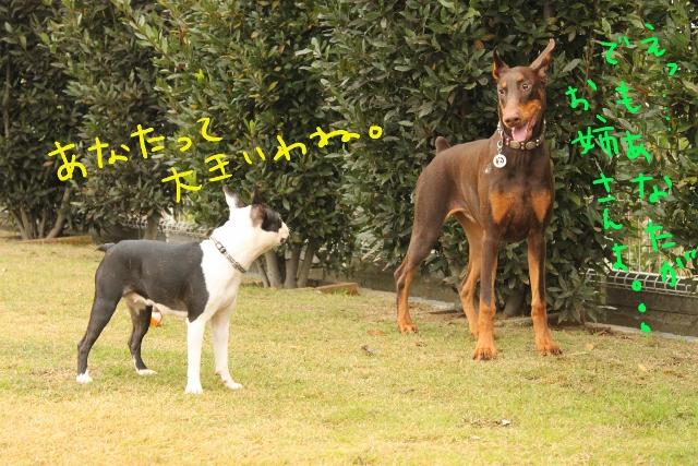 橋本2011.11.03 061_edited-1 (640x427)