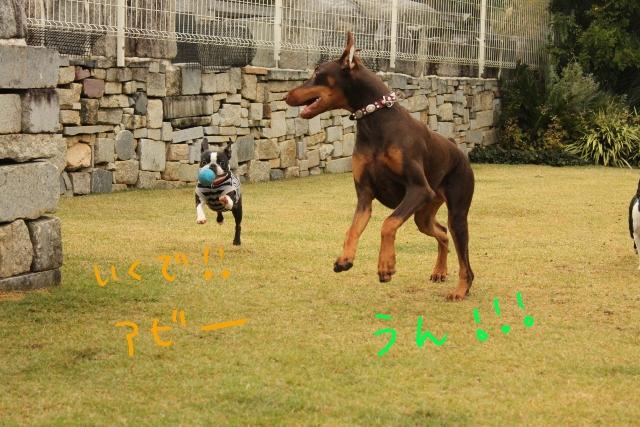 橋本2011.11.03 086_edited-1 (640x427)