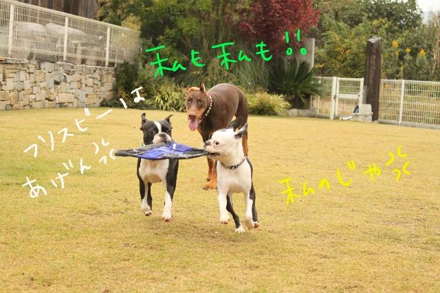 橋本2011.11.03 115_edited-1 (640x427)
