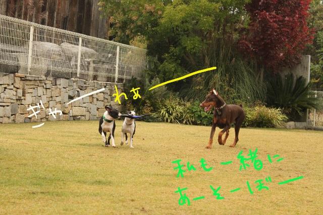 橋本2011.11.03 111_edited-1 (640x427)