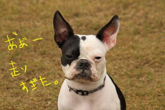 橋本2011.11.03 157_edited-1 (640x427)
