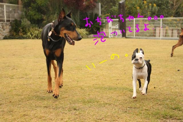 橋本2011.11.03 119_edited-1 (640x427)