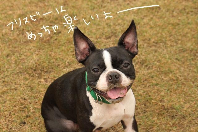 橋本2011.11.03 156_edited-1 (640x427)