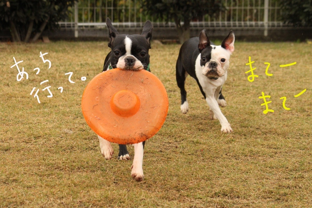 橋本2011.11.03 159_edited-1 (640x427)