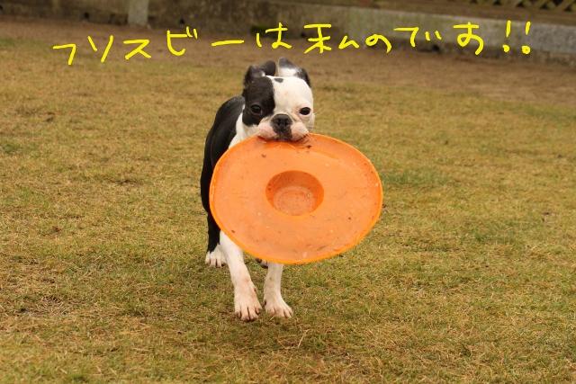 橋本2011.11.03 227_edited-1 (640x427)