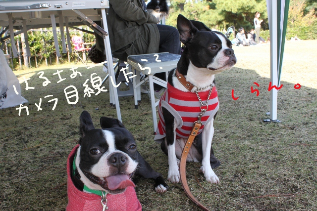 ぽんみり、和歌山2011.11.20 265_edited-1 (640x427)