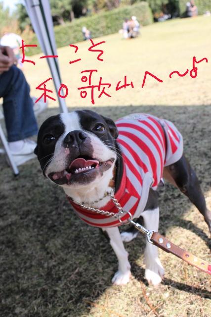 ぽんみり、和歌山2011.11.20 229_edited-1 (427x640)