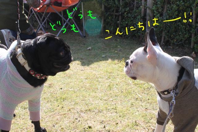 ぽんみり、和歌山2011.11.20 267_edited-1 (640x427)