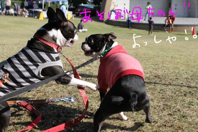 ぽんみり、和歌山2011.11.20 242_edited-1 (640x427)