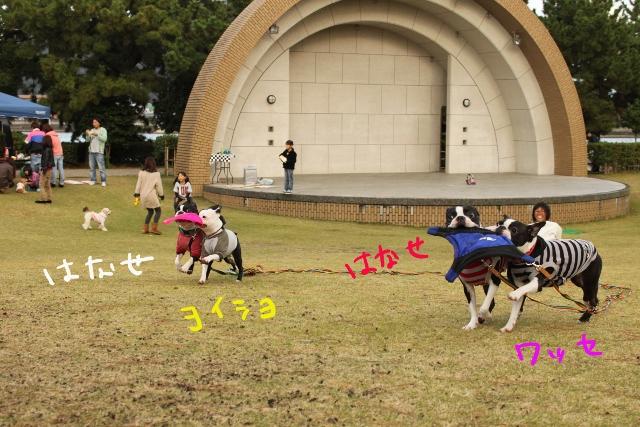 ぽんみり、和歌山2011.11.20 374_edited-1 (640x427)