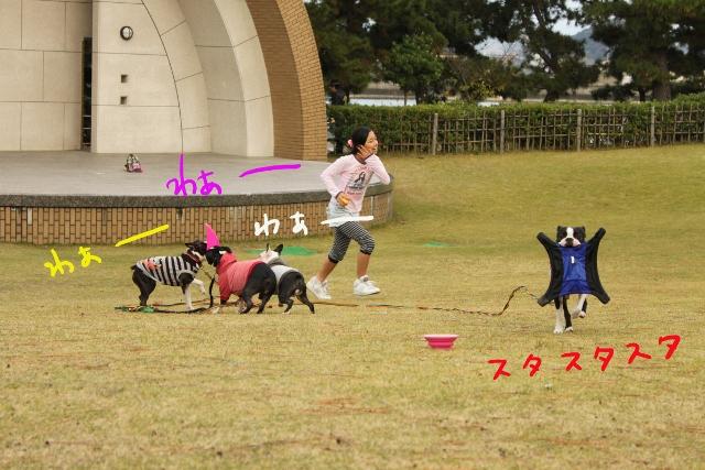 ぽんみり、和歌山2011.11.20 352_edited-1 (640x427)