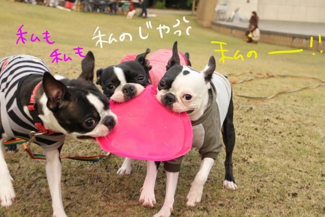 ぽんみり、和歌山2011.11.20 358_edited-1 (640x427)