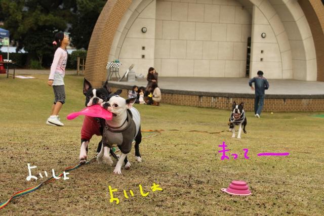 ぽんみり、和歌山2011.11.20 348_edited-1 (640x427)