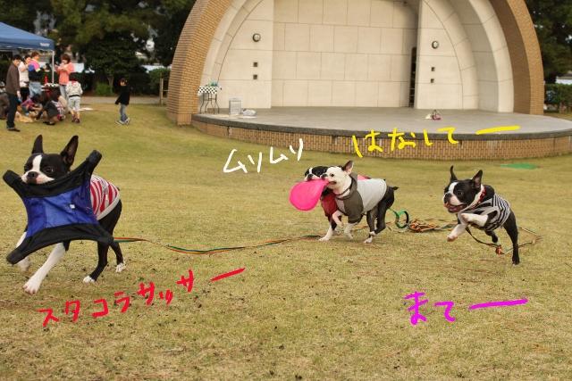 ぽんみり、和歌山2011.11.20 381_edited-1 (640x427)