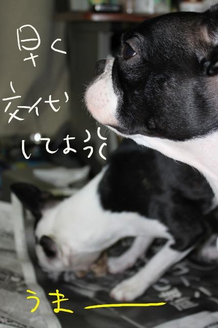 ぽんみり、公園 206_edited-1 (427x640)