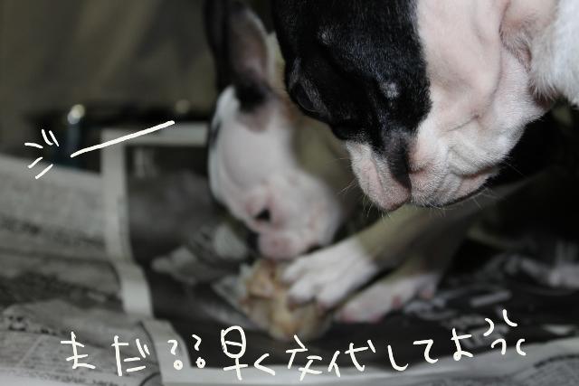 ぽんみり、公園 212_edited-1 (640x427)