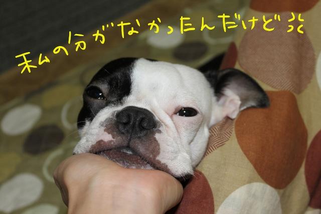 ぽんみり、公園 269_edited-1 (640x427)