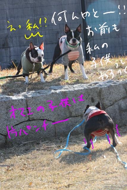 ぼとめ、ぽんみり 164_edited-1 (427x640)