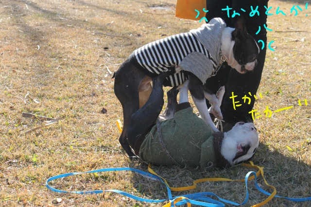 ぼとめ、ぽんみり 268_edited-1 (640x427)