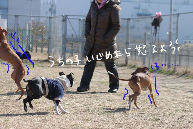 ぽんみり2012.01.02 046_edited-1 (640x427)