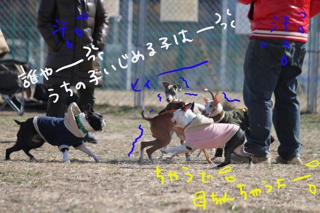 ぽんみり2012.01.02 036_edited-1 (640x427)