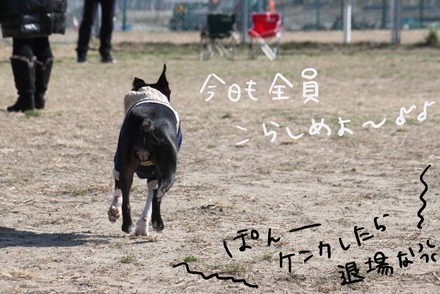 ぽんみり2012.01.02 022_edited-1 (640x427)