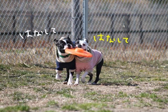 ぽんみり2012.01.02 076_edited-1 (640x427)