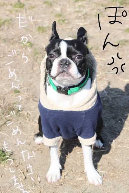 ぽんみり2012.01.02 109_edited-1 (427x640) (2)